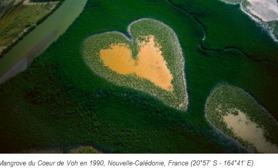 2020-09-20 08_27_08-Le Développement Durable, Pourquoi _ - Accéder à l'eau potable - Mangrove du Coe.png